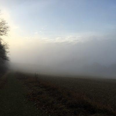 Fields in the mist